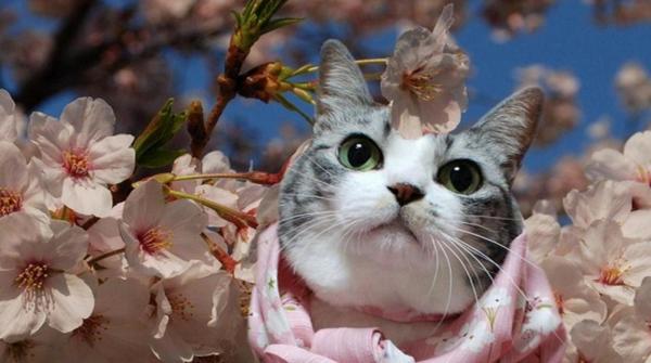 Giappone E Gatti I 25 Nomi Più In Voga Per Gli Amici Neko Animeclick