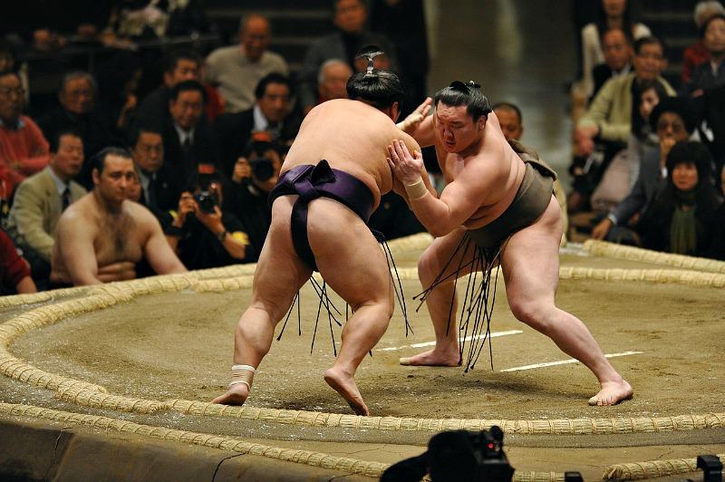 Risultati immagini per sumo
